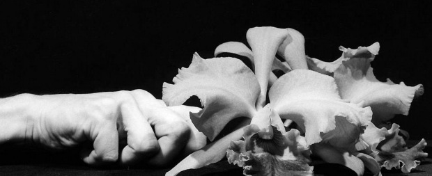 Robert Mapplethorpe, Detail: Orchid and Hand - 1983 Tate Gallery, London