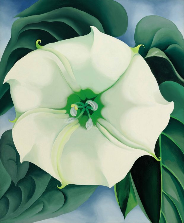 """Jimson Weed/White Flower No. 1"" is an oil on canvas painted by Georgia O'Keeffe in 1932."
