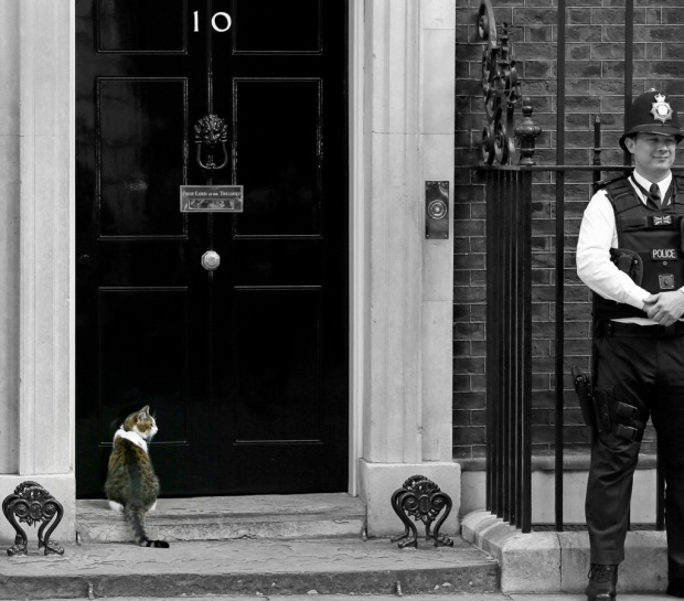 Larry the Downing Street cat sits on the steps of 10 Downing Street in London, after Britain's Prime Minister David Cameron left to face prime minister's questions for the last time Wednesday, July 13, 2016. Cameron will be appearing before Parliament as prime minister for the last time before handing over to successor Theresa May.(AP Photo/Kirsty Wigglesworth)